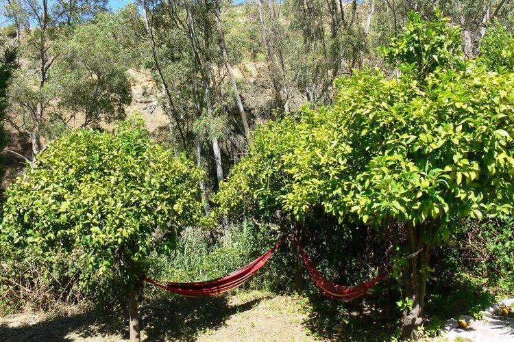 Vegan-BB-Finca-Pereila-hammocks